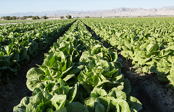 Agriculture in Yuma
